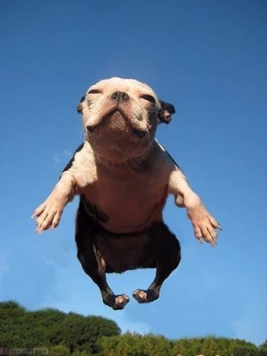 dog jumping for joy